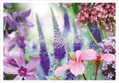 Bepflanzungskollektion für Gräber in voller Sonne mit Pastelltönen