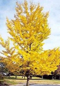 Ginkgo Biloba - Naturland - Capsules de plantes - Vitalya - Comparatif