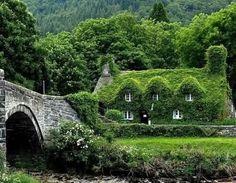 ivy cottage!