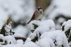 """""""#WinterinCT"""" """" #CenterofCT"""".......... Winter in CT photo Contest.   Wintery scene"""