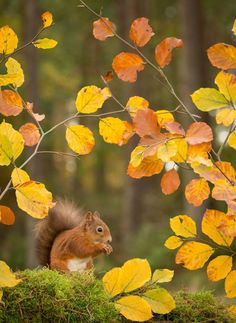 Little Squirrel Finding Some Time to Snack on a Beautiful Fall Day. Beautiful Creatures, Animals Beautiful, Cute Animals, Autumn Day, Autumn Leaves, Autumn Harvest, Autumn Scenes, Autumn Aesthetic, Tier Fotos