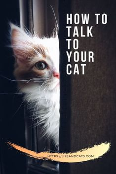 Learn how cats communicate, both vocals and body language. Cats are subtle but very expressive, if we are willing to listen. Maine Coon, Cat Behavior Problems, Cat Behaviour, Cat Races, Cat Expressions, Chesire Cat, Mean Cat, Cat Info, Kitten Care