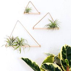 indoorplantairplant.jpg (500×500)