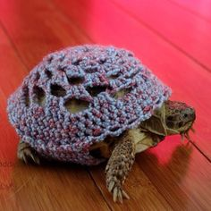 A turtle with shell sweater!