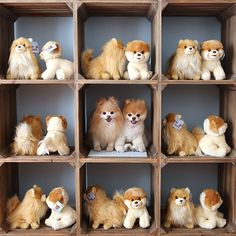 """From Instagram - """"2/1014"""" Boo and Buddy hiding among the stuffed animals."""