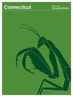Julian Montague - Connectictut's insigna (European Mantis)