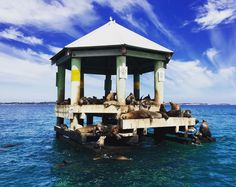 It's a perfect time of year to discover our local marine life with @southbayecoadventures in #queenscliff  It's the perfect #schoolholidays activity! #seals #chinamanshat by big4beaconresort http://ift.tt/1JO3Y6G