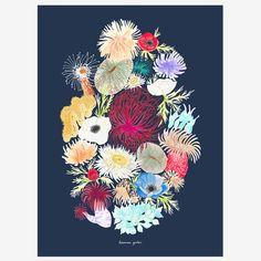 ilustración anémona, dibujo flores, dibujo marino, dibujo anémona, dibujo floral, print flores, ilustración flores, dibujo naturaleza