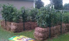 Straw bale gardening.