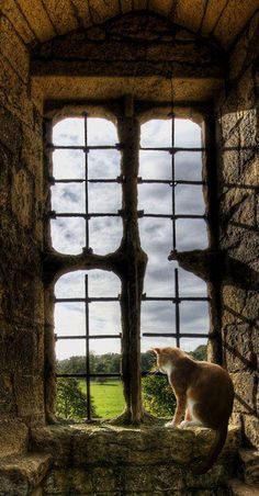 Cats always find the best places to perch and enjoy the view. Doesn't this old stone structure have great windows and stunning vistas? Cat Window, Window View, Window Ledge, Crazy Cat Lady, Crazy Cats, I Love Cats, Cute Cats, Funny Kitties, Amor Animal