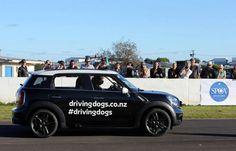 ¿Pueden los perros conducir un coche? Estos si Esta es la campaña más original y creativa que hemos visto en defensa de los perros abandonados.  La sociedad protectora de animales SPCA de Auckland (Nueva Zelanda) tiene que encontrar un hogar para miles de perros todos los años.