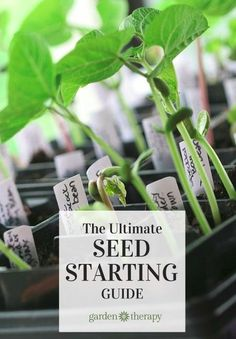 Start Garden Seeds Indoors Starting seeds indoors without a grow light grow lights lights starting seeds indoors without a grow light grow lights lights and gardens workwithnaturefo