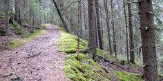 Katikan kanjoni Kauhajoki, Finland.