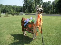 Llama Twist wearing a butterfly costume that I made.