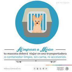 Al ingresar a México tu mascota deberá viajar en una transportadora o contendedor limpio, sin cama, ni accesorios. SAGARPA SAGARPAMX #MéxicoSiembraÉxito