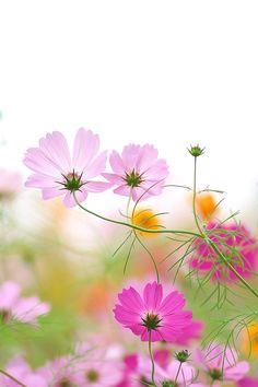 Best Free Spring Desktop Wallpaper Download Free Spring 400 x 300
