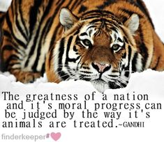Great Quotes for animals | 20 Great Gandhi Quotes To Guide You Through Your Day | Famous Quotes ...