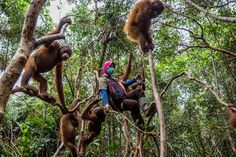 How Big Banks Are Putting Rain Forests in Peril  http://www.nytimes.com/2016/12/03/business/energy-environment/how-big-banks-are-putting-rain-forests-in-peril.html?ribbon-ad-idx=4&rref=business&module=Ribbon&version=context&region=Header&action=click&contentCollection=Business%20Day&pgtype=article