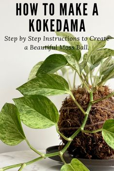 Simple step by step tutorial to create a beautiful Kokedama for your home. String Garden, House Plants Decor, Plant Decor, Hanging Plants, Indoor Plants, Hanging Gardens, Air Plants, Planting Succulents, Planting Flowers
