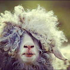 That hair makes me smile!  Wish I knew what kind of animal this is.... but it sure made me laugh !
