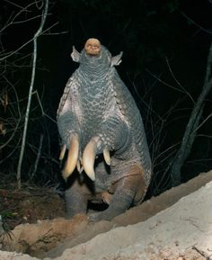 A female giant armadillo sniffs the air in Brazil's Pantanal region in 2011.