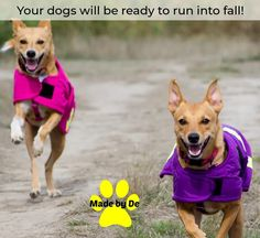You and your dog will enjoy the changing weather more if you're ready for it. Small Dog Coats, Small Dogs, Dog Activities, Little Dogs, Life Is Good, Weather, Fall, Little Puppies, Autumn
