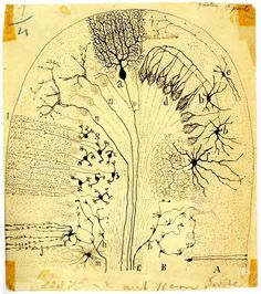 Parasagittal section of the cerebellum Ink drawing on paper, Santiago Ramón y Cajal, 1894 3d Character, Character Design, Brain Art, Wellcome Collection, Natural Sleep Aids, Image Nature, Illustration, Nervous System, Vintage World Maps