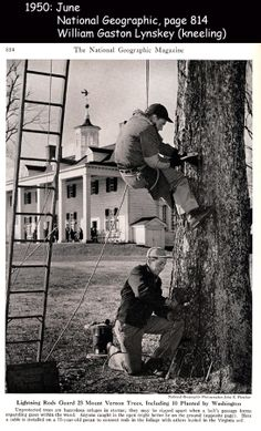 My grandfather (kneeling) working as an arborist at Mount Vernon. Picture appeared in National Geographic, 1950.