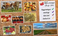 Kállai Tibor munkája - Galagonya Helyi piac gyakorlat 1. kör - mooboard ------------------------------------- Tervezz Te is ilyeneket! http://www.webdesigntanfolyam.com
