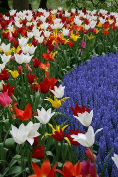 Keukenhof Gardens, The Netherlands. Photo: Taniuszka, via Flickr
