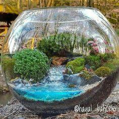 Best of terrarium. Mini Terrarium, Terrarium Scene, Terrarium Plants, Succulent Terrarium, Miniature Plants, Miniature Fairy Gardens, Ideas Florero, Mini Mundo, Mini Fairy Garden