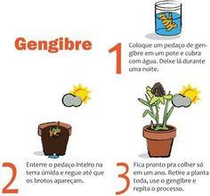 Gengibre Eco Garden, Garden Care, Green Garden, Indoor Garden, Garden Plants, Planting Vegetables, Organic Vegetables, Vegetable Garden, House Plants Decor