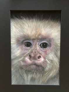Referentie foto Remco Walravens Monkey, Painting, Monkeys, Painting Art, Paintings, Painted Canvas