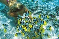 swim and snorkel in the blue lagoons, tahiti