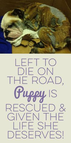 Left To Die On The Road, Puppy Is Rescued && Given The Life She Deserves!
