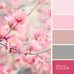 Sakura | Discover Color Palette