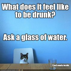 Emptiness - LOLcats is the best place to find and submit funny cat memes and other silly cat materials to share with the world. We find the funny cats that make you LOL so that you don't have to. Funny Science Jokes, Funny Riddles, Funny Cat Memes, Funny Posts, Funny Quotes, Hilarious, Funny Stuff, Random Stuff