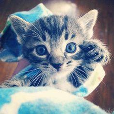 #Cats  #Cat  #Kittens  #Kitten  #Kitty  #Pets  #Pet  #Meow  #Moe  #CuteCats  #CuteCat #CuteKittens #CuteKitten #MeowMoe      Roar! ...   https://www.meowmoe.com/48032/
