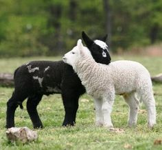 I am the black sheep and I don't mind! #confidence is everything.