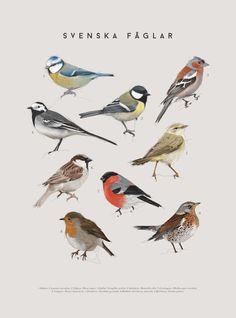 Bird Illustration, Illustrations, Animal Templates, Chicken Crafts, Bird Embroidery, Bird Artwork, Bird Theme, Backyard Birds, Watercolor Bird