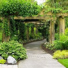 Nice sturdy arbor walkway - need a smaller version of this!