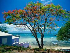 Papel de Parede Mobile - Praias: http://wallpapic-br.com/paisagens/praias/wallpaper-39419