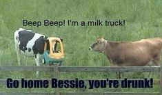 I'm a milk truck! Go home Bessie, vou're drunk Beep beep im a milk truck - cow meme from Items tagged as Drunk Meme Lol, Haha Funny, Funny Jokes, Hilarious, Funny Stuff, Funny Things, Funny Shit, Drunk Memes, Sarcastic Humor
