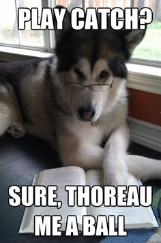Condescending Literary Pun Dog (Click through for more puns!)