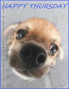Cute Dog Wishing You Happy Thursday Chihuahua Love, Chihuahua Puppies, Baby Puppies, Dogs And Puppies, Doggies, Chihuahuas, Yorkie, Dog Love, Puppy Love