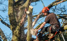 #Tree_removal is the service that comes to answer the need of dislodging a tree. Even though most people are aware of the importance of trees and will try to ensure that they will stay in place for as long as possible, there are different reasons and circumstances when a tree needs to be cut down.