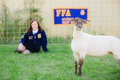 | FFA Senior Picture | #FFA #Sheep #Showgirl but the sheep should go in the background