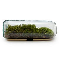Mother Nature In A Bottle  Bring the tranquility of the outdoors inside with this mossy microcosm that adds the calm presence of nature to spaces that could use an antidote to daily stress.