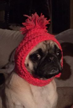 Pug Greta in her new hat