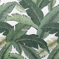 Swaying Palms, Aloe (Indoor / Outdoor)   $15.95
